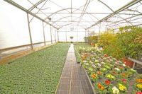 Jardinerie Crissier-min.JPG