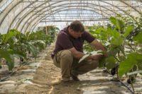 Vente direct agriculteur fruits legumes versoix geneve